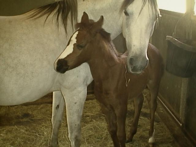 DE Silver Lady & foal by Placers Gold
